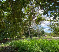Đo Đạc Đất Sào Xã Bình Lộc Long Khánh